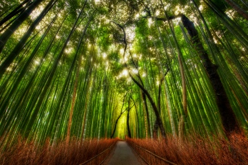 © Trey Ratcliff: Attribution-NonCommercial-Sharealike http://www.flickr.com/photos/68647410 @N05/6245847402/sizes/l/